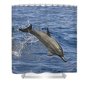 Dolphins Leaping Shower Curtain