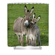 Donkey Mother And Young Shower Curtain