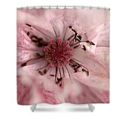 Double Dusty Rose Poppy From The Angel's Choir Mix Shower Curtain