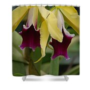 Double Orchid Shower Curtain