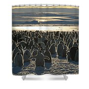 Emperor Penguin Aptenodytes Forsteri Shower Curtain by Pete Oxford