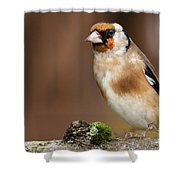 European Goldfinch Bird Close Up   Shower Curtain