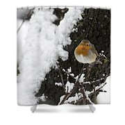 European Robin Erithacus Rubecula Shower Curtain