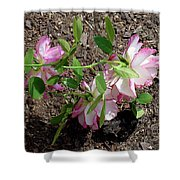 3 Fallen Roses Shower Curtain