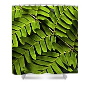 Fern Close-up Of Water Droplets  Shower Curtain