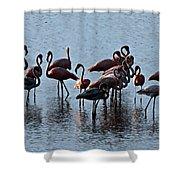 Flamingo Family Shower Curtain