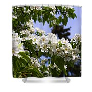 Flowering Pear Branch In The Garden Shower Curtain