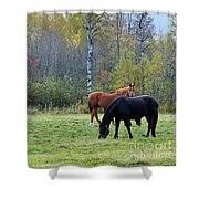 3 Horses Shower Curtain