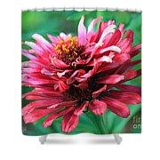 Fuchsia Pink Zinnia From The Whirlygig Mix Shower Curtain