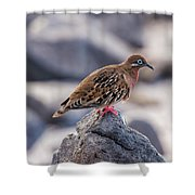 Galapagos Dove In Espanola Island. Shower Curtain