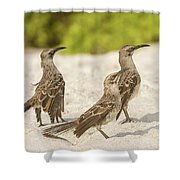 Galapagos Hood Mockingbird Shower Curtain