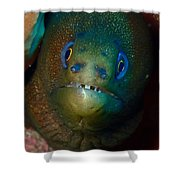 Golden Moray Eel Shower Curtain