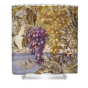 Grapes And Olives Shower Curtain