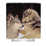 Gray Wolves Shower Curtain