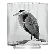 Great Blue Heron Hunting Shower Curtain