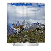 Guanacos In Torres Del Paine Shower Curtain