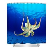 Hawaii, Day Octopus Shower Curtain by Dave Fleetham - Printscapes