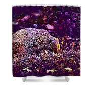 Hedgehog Animal Spur Nature Garden  Shower Curtain