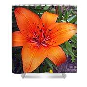 Hemerocallis Flower Shower Curtain