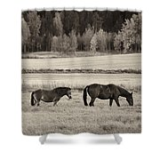 Horses Of The Fall  Bw Shower Curtain