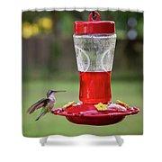 My Sweet Hummingbird Shower Curtain