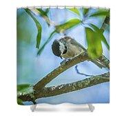 Huthatch Bird  Nut Pecker In The Wild On A Tree Shower Curtain