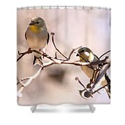 Img_0001 - American Goldfinch Shower Curtain