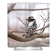 Img_0001 - Downy Woodpecker Shower Curtain