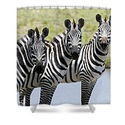3 In A Row Shower Curtain