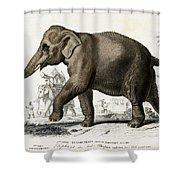 Indian Elephant, Endangered Species Shower Curtain