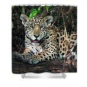 Jaguar Panthera Onca, Pantanal Shower Curtain