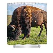Kansas Buffalo Shower Curtain