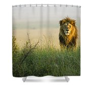 King Of The Savanna Shower Curtain