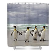 King Penguin Aptenodytes Patagonicus Shower Curtain