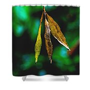 3 Leaves Shower Curtain