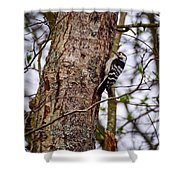 Lesser Spotted Woodpecker Shower Curtain