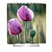 Lilac Poppy Flowers Shower Curtain