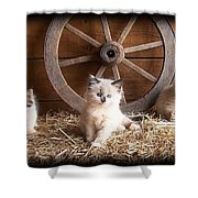 3 Little Kittens With The Wagon Wheel. Shower Curtain
