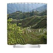 Longsheng Rice Terraces Shower Curtain