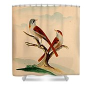 Lord's Entire New System Of Ornithology Shower Curtain