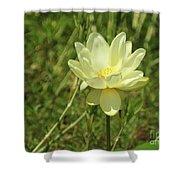 Lotus Flower In Bloom  Shower Curtain