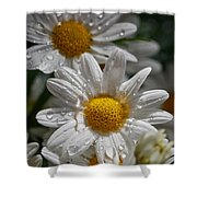 Marguerite Daisy Shower Curtain