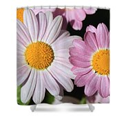 Marguerite Daisy Named Petite Pink Shower Curtain