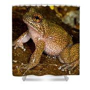 Mehu�n Green Frog Shower Curtain