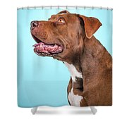 Metta Shower Curtain