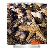 Mix Group Of Seashells Shower Curtain