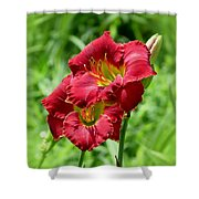 Red Lily Pair Shower Curtain