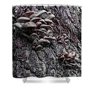 Mushroom Art Shower Curtain