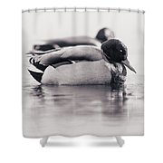 Napping Shower Curtain