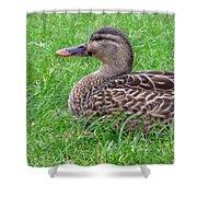 New Zealand - Female Mallard Duck Shower Curtain